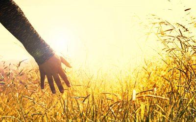 Lo que has de saber para crear una nueva realidad